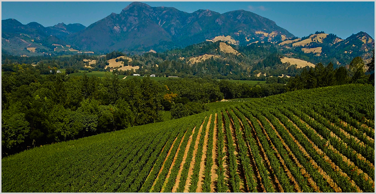 Vineyards For The 2014 Knights Bridge Cabernet Sauvignon