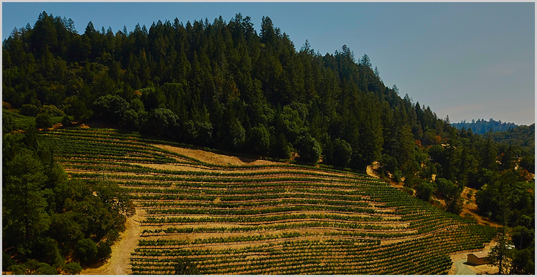 Vineyards For The 2015 Knights Bridge Cabernet Sauvignon